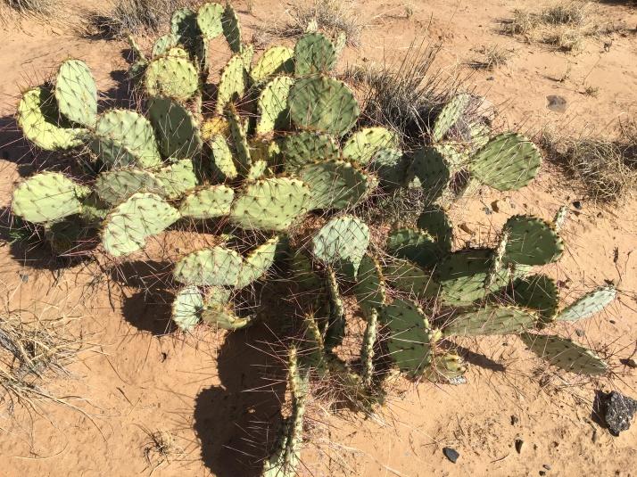 Still In The Desert